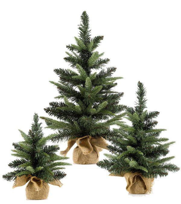Mini Colorado Christmas Tree