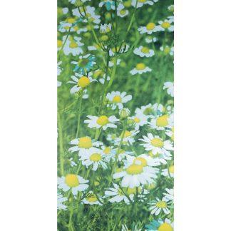 FLOWERFIELD BANNER
