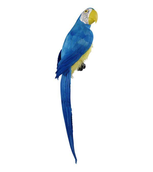 Macaw 71cm