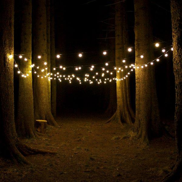 warm white festoons in forest