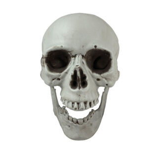 front view of white skull decoration