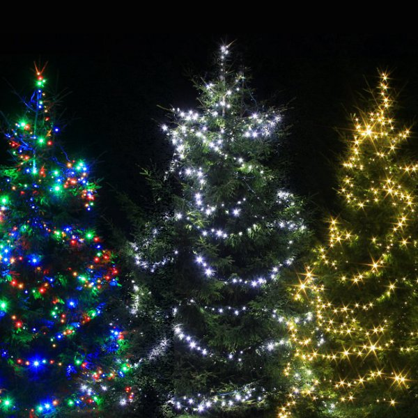 Outdoor fairy lights on christmas trees