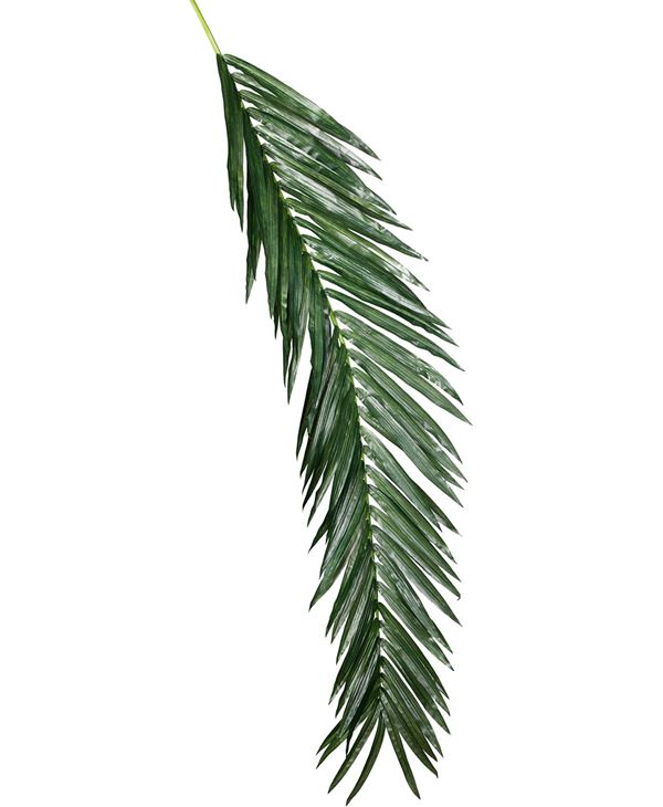 Giant Oil Palm Branch - 244cm Long - Green - Sold Individually