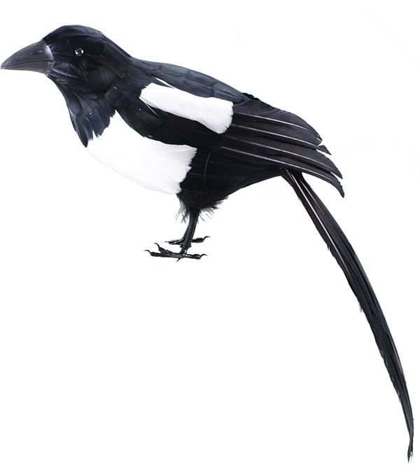 Magpie - 28cm X 66cm - Black and White - Sold Individually