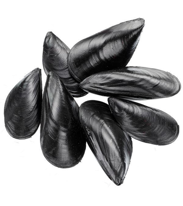 Mussels - 9cm Long - Black - Pack of 24