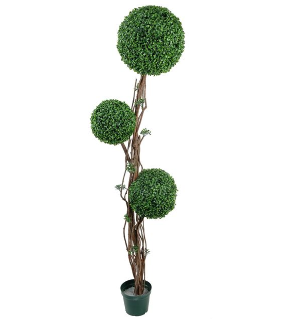 Boxwood Topiary 1.8m - 180cm Tall X 45cm Wide - Green