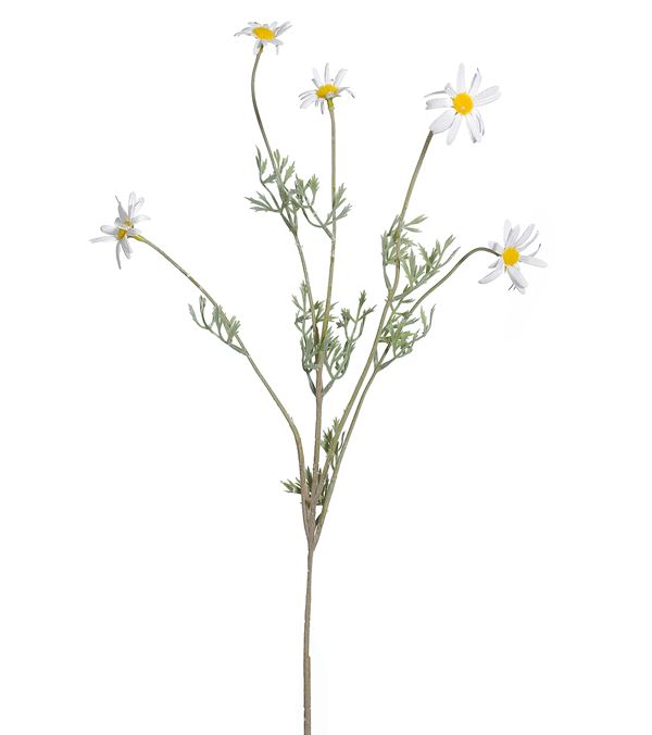 Marguerite Spray - 73cm Tall - Multicolour - Pack of 12