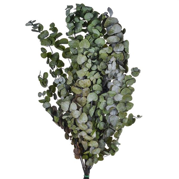 Eucalyptus Bunch - Green - 250g - Pack of 1