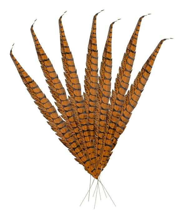 Pheasant Feathers - 70cm - Brown - Pack of 10