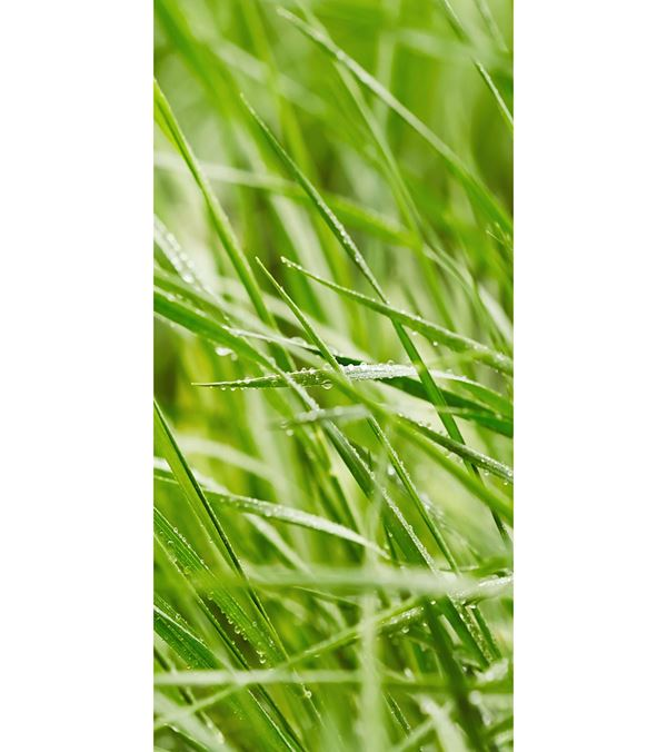 Emmy Banner - 180cm X 90cm - Green - Sold Individually