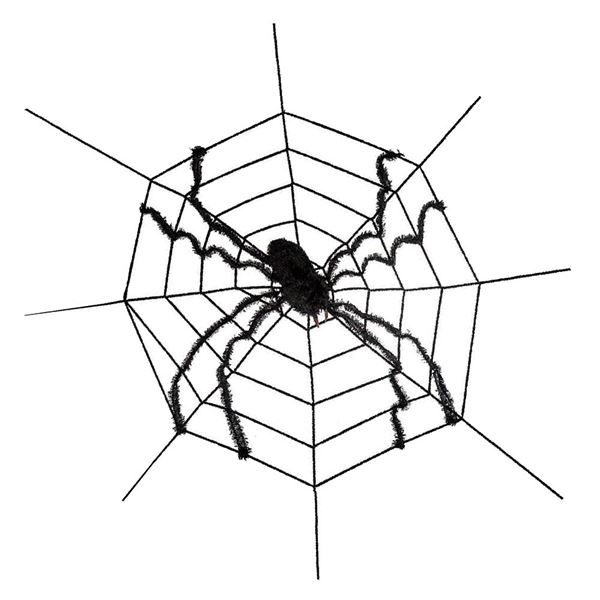 Large Spider on Web
