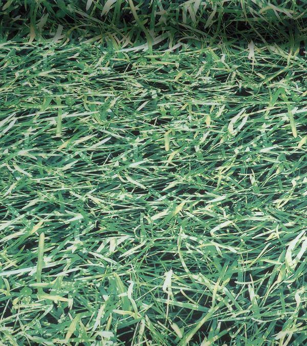 Grass Photoprint Fabric - 150cm Wide - Green - Per Linear Metre