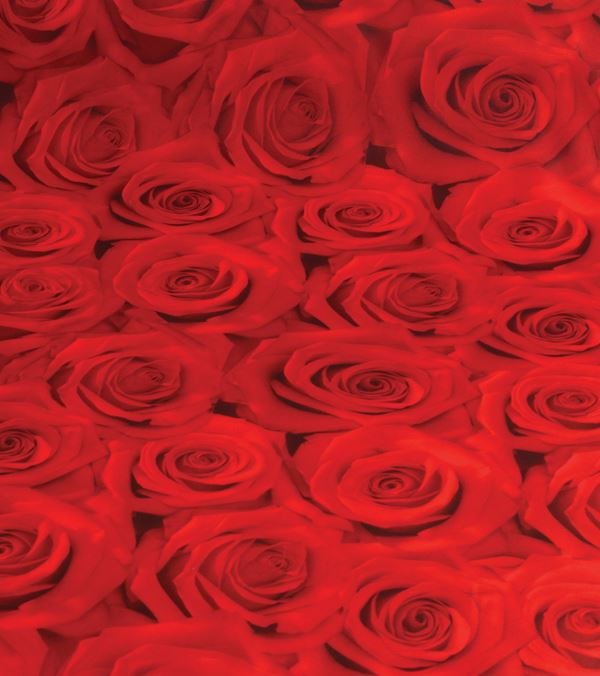 Roses Photoprint Fabric - 150cm Wide - Red - Per Linear Metre