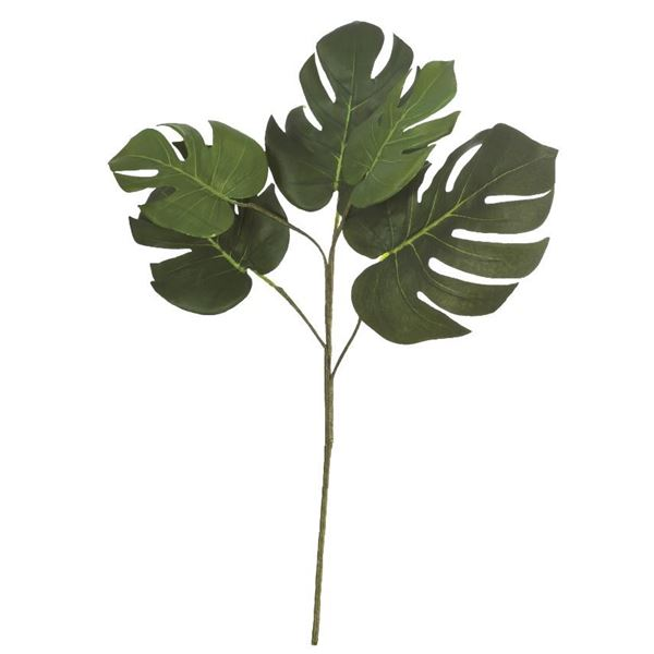 Philodendron Spray - 60cm - Individual