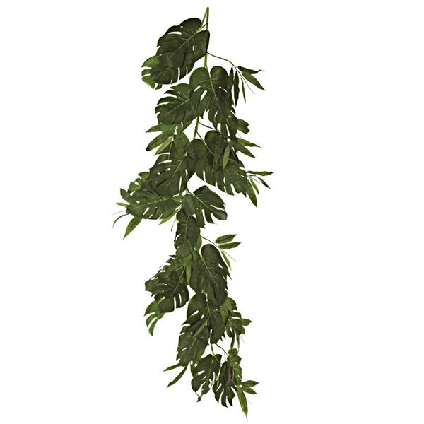 Philodendron Garland - 180cm - Individual