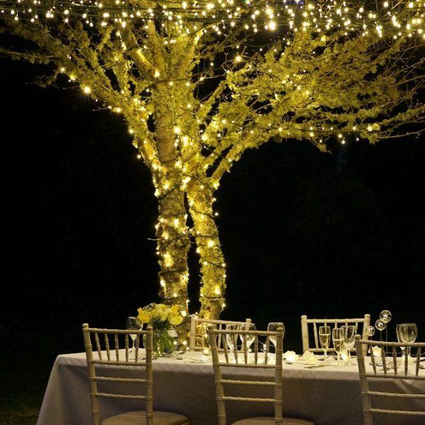 Warm White String Lights on Tree